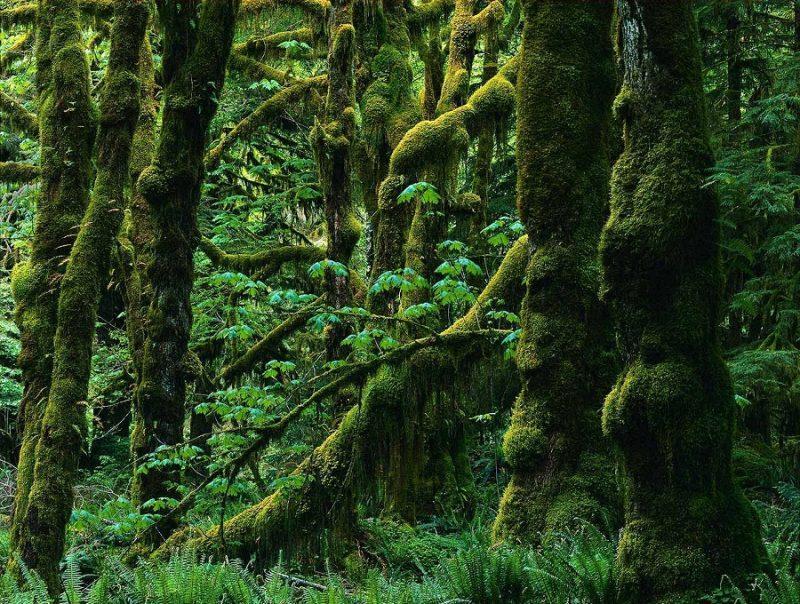 آنالیز پرونده ثبت جهانی جنگل های هیرکانی گیلان با حضور بازرسان یونسکو
