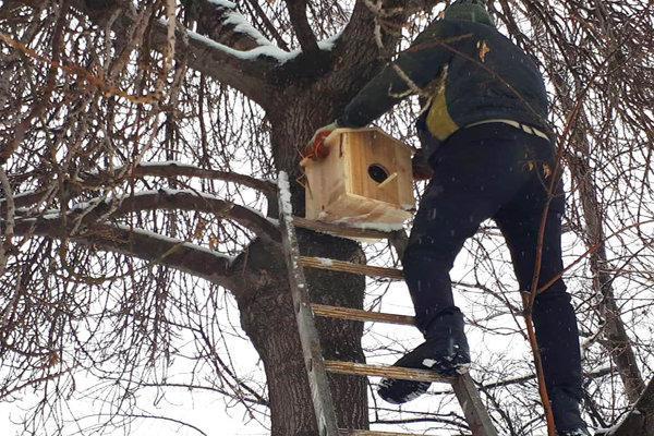 نصب 50 آشیانه پرندگان در خلخال، زمستان برای حیوانات آسان می گردد