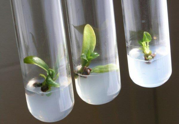 تولید سوخت زیستی از ریزجلبک ها توسط محققان کشور