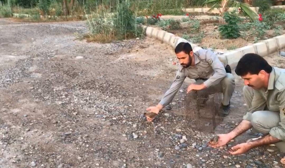 خبرنگاران 2 گردشگر خارجی در پارک ملی دز دستگیر شدند