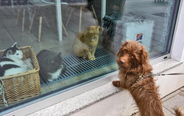 سگ ها و گربه ها هم واکسن کرونا بزنند؟!