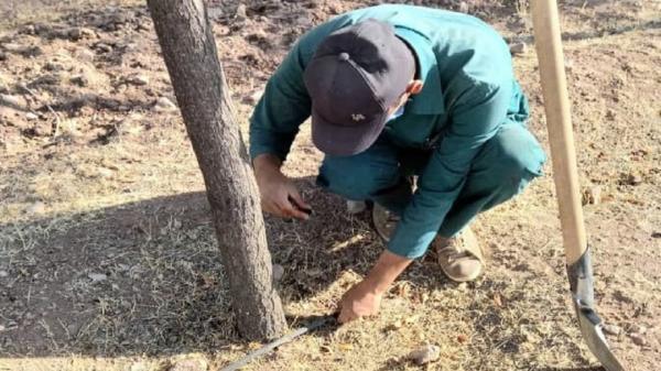 تور قطر ارزان: بهسازی سیستم آبیاری قطره ای کمربند سبز شرق قزوین